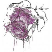 Распускающаяся роза