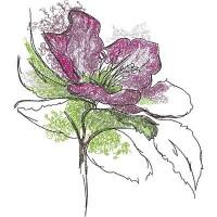 Раскрытый цветок