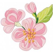 Яблочный цвет