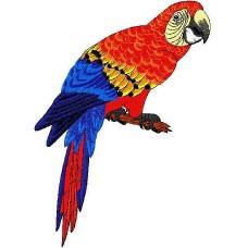 Дизайн машинной вышивки Попугай скачать